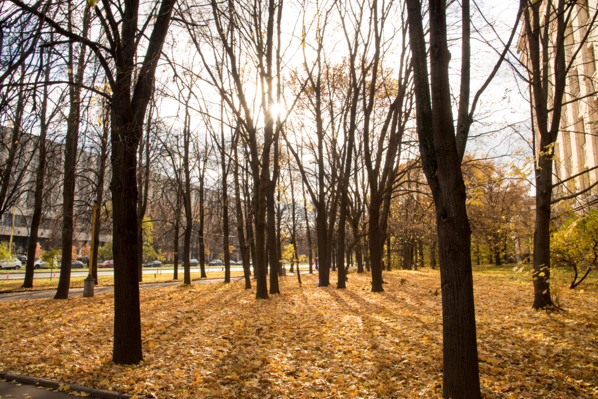 Солнце ипервый снег. Воробьёвы горы, МГУ, Нескучный сад.