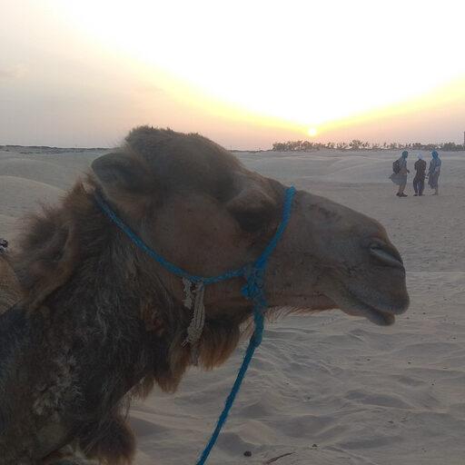 Тунис. Закат солнца в Сахаре.