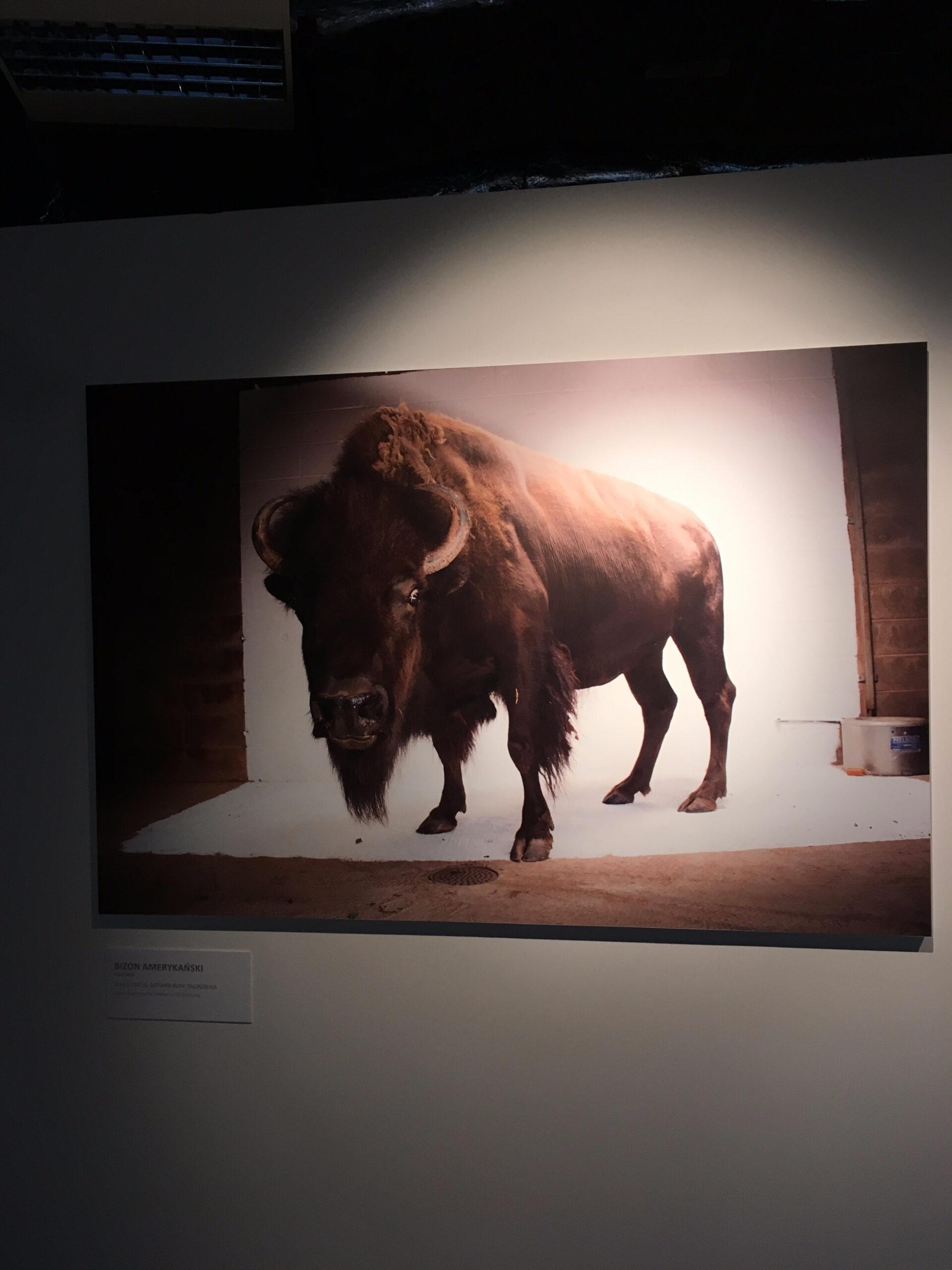 Фото-выставка National Geographic