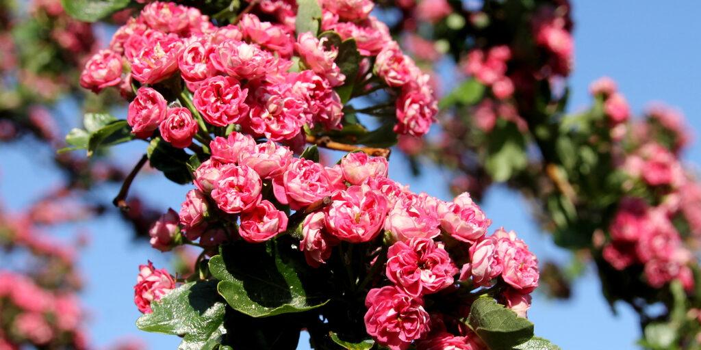 Майское цветение вокруг дома