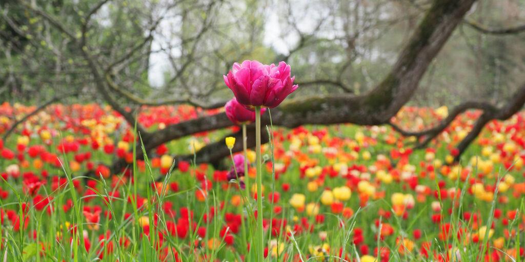 Юг Германии. Озеро Бодензее. Остров цветов Майнау. Май 2109 г.-3
