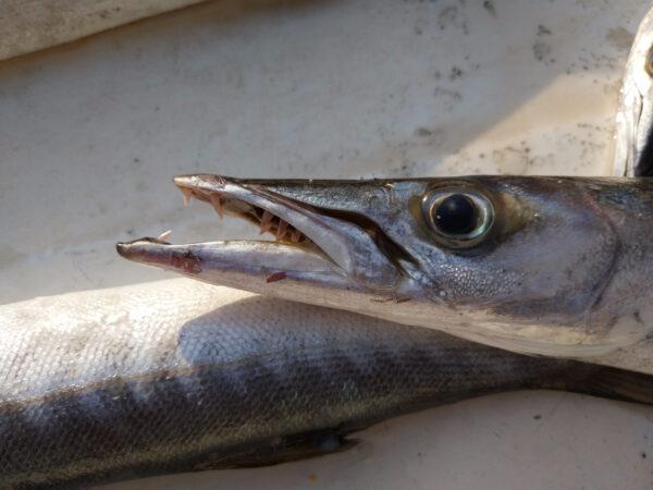 Путешествие вОман… рыбный аукцион…