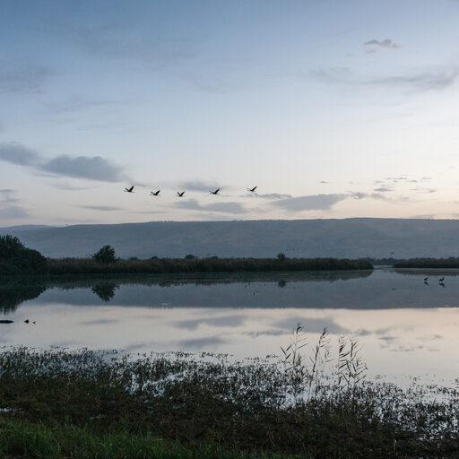 Долина Хула — пристанище перелётных птиц.