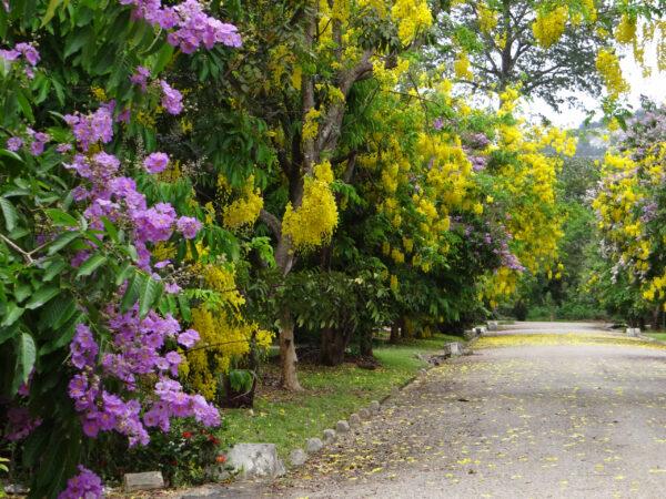 Гана. Весна наэкваторе.