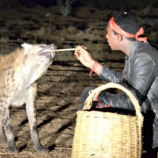 В городе Харер кормят диких животных